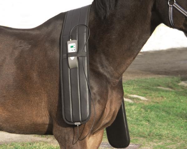 Equine PEMF Therapy Horse Bundle Back Blanket Leg Shoulder Neck Treatment